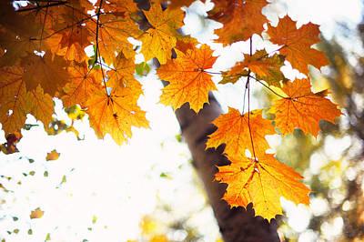 Falling Leaves Art Print by Jenny Rainbow