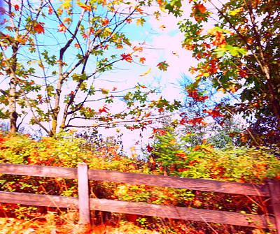 Photograph - Falling Leaves by Nikki Dalton