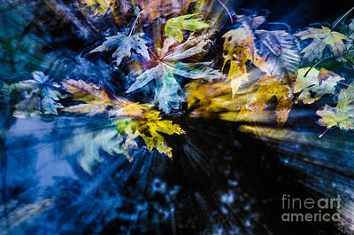 Photograph - Falling On The Stream by Michael Arend