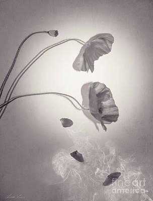 Photograph - Falling Petals by Linda Lees