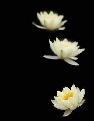 Photograph - Falling Stars by Rebecca Cozart