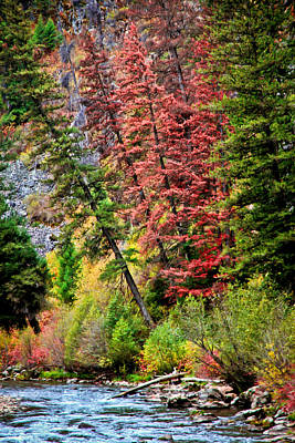 Photograph - Falling Trees II by Athena Mckinzie