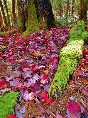 Fall's Carpet Art Print