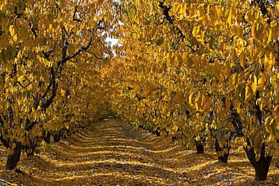Photograph - Fall's Gold by Rich Berrett