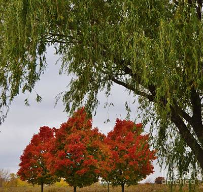 Photograph - Fall's Trio Of Color by Brigitte Emme