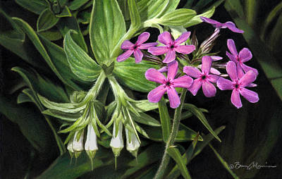 Drawing - False Gromwell With Prairie Phlox by Bruce Morrison