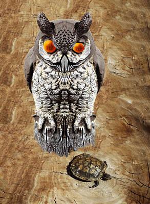 Fake Owl Photograph - False Owl And Stuffed Turtle by Bruce Iorio