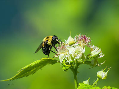 Fame Is A Bee Print by Bob Orsillo