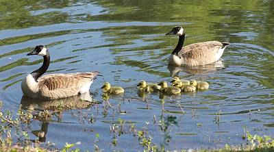 Photograph - Family Of Canada Geese by Jeanne Kay Juhos