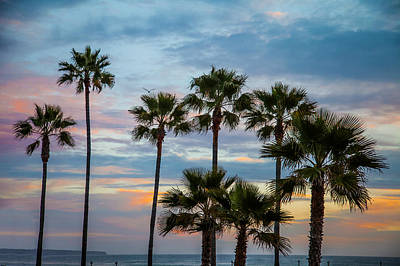 Family Of Palms Art Print