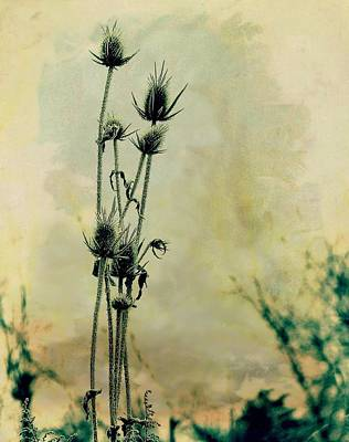 Botanical Art Mixed Media - Family Of Teasels by Gothicrow Images