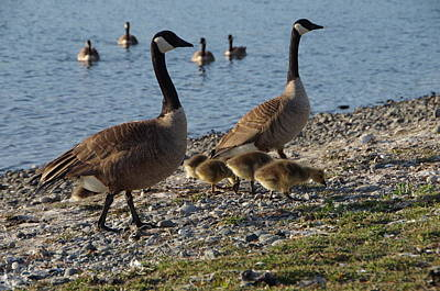 Esquimalt Photograph - Family Outing by Marilyn Wilson