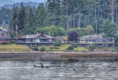 Photograph - Family Outing - Orcas by Randy Hall