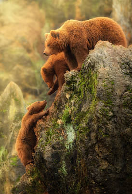 Brown Bear Wall Art - Photograph - Family by Sergio Saavedra Ruiz