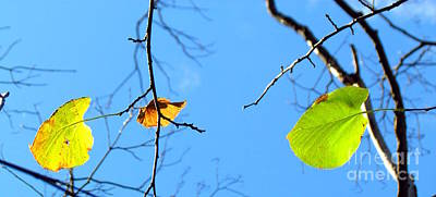 Photograph - Famous Fall 124 by France Laliberte