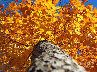 Photograph - Famous Fall 131 by France Laliberte