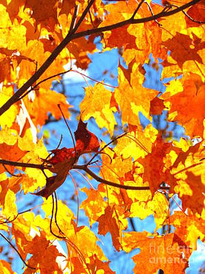 Photograph - Famous Fall 132 by France Laliberte