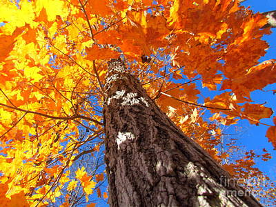 Photograph - Famous Fall 135 by France Laliberte