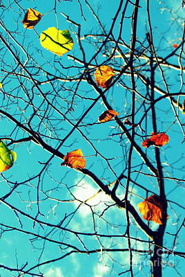 Photograph - Famous Fall 137 by France Laliberte