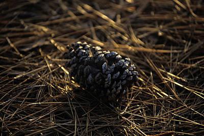 Photograph - Famous Pinehurst Pinecones by Dom Furore
