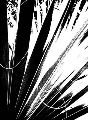 Photograph - Fan Frond Abstract by Ginny Schmidt