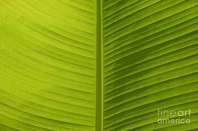 Photograph - Fan Of Green 1 by Wendy Wilton
