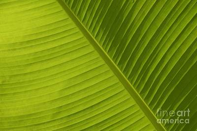 Photograph - Fan Of Green 2 by Wendy Wilton