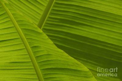 Photograph - Fan Of Green 3 by Wendy Wilton