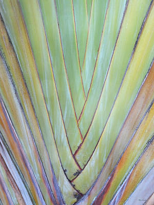 Photograph - Fan Palm Abstract 2 by Duane McCullough
