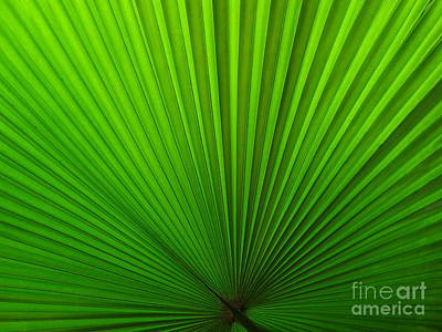 Photograph - Fan Palm by Ranjini Kandasamy