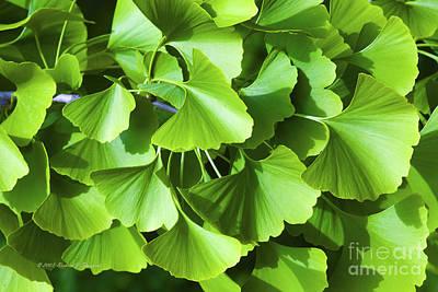 Photograph - Fan Shaped Leaves by Richard J Thompson