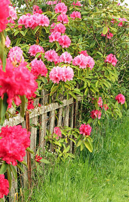 Photograph - Fancy Fence by E Faithe Lester