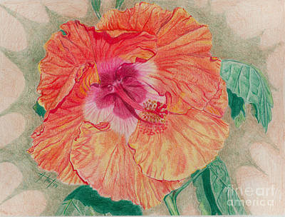 Exotic Plants Drawing - Fancy Hibiscus by Audrey Van Tassell