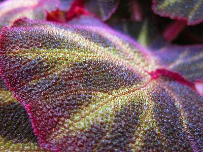 Photograph - Fancy Leaf by MTBobbins Photography
