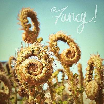 Natural Photograph - Curly Fern Fronds by Blenda Studio