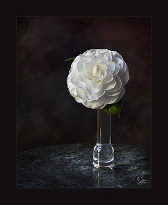 Photograph - Fancy White Camellia In Vase by Endre Balogh