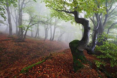 Beech Photograph - Fangorn Forest by Martin Rak