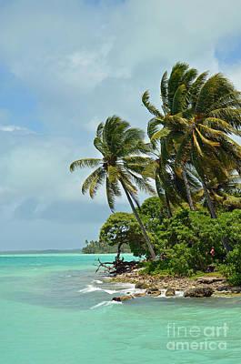 Digital Art - Fanning Island Coconut Trees by Eva Kaufman
