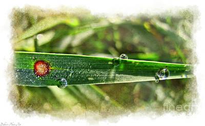 Photograph - Fantastic Dew by Debbie Portwood