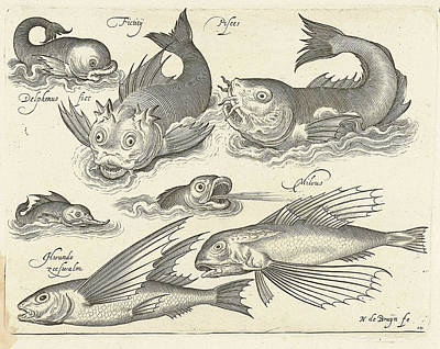 Fantastic Invertebrates, Including Dolphin And Dragonet Art Print by Nicolaes De Bruyn