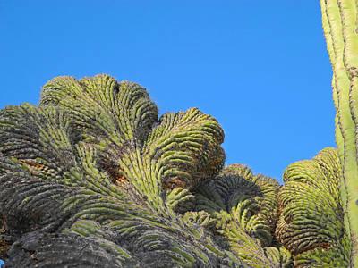 Photograph - Fantastic Saguaro Crest by Lynda Lehmann