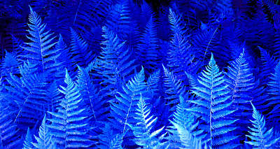 Photograph - Fantasy Blue Ferns by Duane McCullough