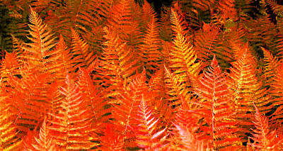 Photograph - Fantasy Fire Ferns by Duane McCullough