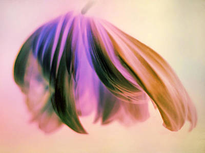 Abstract Movement Photograph - Fantasy Floral by Jessica Jenney