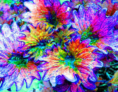 Photograph - Fantasy Flower 2 by Duane McCullough