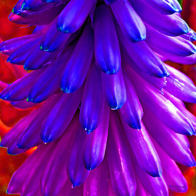 Photograph - Fantasy Flower 5 by Duane McCullough