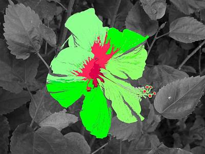 Digital Art - Fantasy Flower 6 by Ron Davidson
