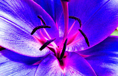 Photograph - Fantasy Flower 9 by Duane McCullough