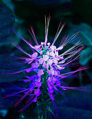 Photograph - Fantasy Flowers 4 by Margaret Saheed