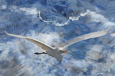 Photograph - Fantasy In Flight by Leda Robertson